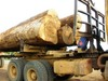 Timber Luber, Logs, Plank