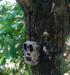 Camouflage trail camera mms gsm surveillance camera