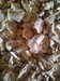 Sumatra Gum Benzoin