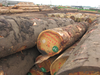 Mahogany Logs, Tali logs, Rosewood- Kosso square logs
