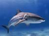 Shark Cartilage Powder