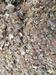 Tree Gum Products- Frankincense & Myrrh