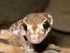 Reptiles for sale born in captivity
