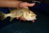 Wild Rare Tropical Fish