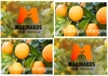 Oranges Valencia