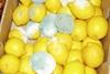 Fresh, High Quality delicious fresh lemon