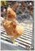 OFFER Chicken Feet & Parts