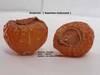 Soapnuts (Washnuts)