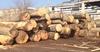 Oak Log, Pine Log, Lumber, Poplar, Beech Logs for sale