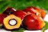 Cude And Refine Palm Oil