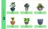 Flower pots/ flower planters