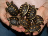 Top quality tortoises for sale at Extremely LOW Prices