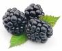 Frozen berries, IQF