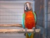 All types of birds like canaries, finches, parrots, parakeets