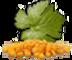 Simin tak co: Seller of: sun raisins, golden raisins, malayer raisins, sultana raisins, kashmari raisins. Buyer of: golden raisins, sun raisins, malayer raisins, sultana raisins, kashmari raisins.