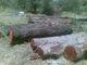 R S T Timber & Doors: Seller of: rosewood, kiaat, pod mahogany, teak, douglas fir, yellow pine, spruce. Buyer of: blades, chain saw, masjinery.