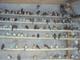 Salasala Birds House