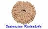Indonesian Rudraksha: Seller of: original rudraksha, rudraksha malas, rudraksha mat, rudraksha hat, rudraksha beads, rudraksha mukhi, rudraksha faces, rudraksha in bulk, higher mukhi rudraksha.