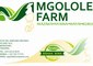 Mgolole Farm: Seller of: eggs, milk, fish, chicken, manure. Buyer of: maize, soya, chick food, fish products.