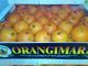 Orangina Export: Regular Seller, Supplier of: export, fruit, orange, lemon, vegetables, clementines, peppers, tomatoes.