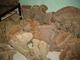 Rabwen Seashells Specimen: Seller of: sea shells, sponge tube, chandelier shells, helmet crab, rare shells, specimen shells, preserve crab, starfish, corals.
