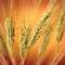 Sezer Degirmencilik Tic. ve San.Ltd.Sti.: Seller of: wheat, wheat flour, sunflower seed. Buyer of: wheat, sunflower seed.
