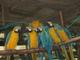 Tropicano Zoo: Seller of: birds, caiman skins, mamals, monkeys, reptiles, anaconda skins.