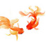 Persian Goldfish: Seller of: tropical fish, goldfish.