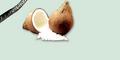 Panocean Co., Ltd.: Seller of: desiccated coconut, glycerine, fatty alcohol, food additive, coconut.