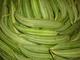 M/s  JTS  International: Seller of: fresh vegetable fruit, rice, readymade garments, leather goods. Buyer of: veg pday2tone, tshartweekly 2000pcs, lather chapple weekly 2000pcs lg.
