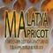 Malatya Apricot Dried Apricot Manufacturing: Seller of: apricots, dried apricot, organic apricot, industrial apricot, sun dried apricot, apricot kernel.