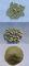 BushPharm: Seller of: hoodia gordonii capsules - 90 x 400mg, hoodia gordonii capsules - bulk, hoodia gordonii powder - bulk, hoodia gordonii tablets - 90 x 400mg, hoodia gordonii tablets - bulk, hoodia capsules 90 x 700mg, weight loss capsules, slimming capsules, weight loss powder.